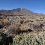 Parque Nacional Del Teide — Stock Photo