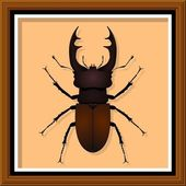 Stag Beetle — Stock Vector