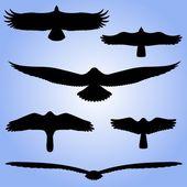 Silhouettes of birds. — Stock Vector