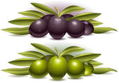 Two composition of olives — Stock Vector