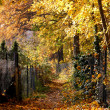 Fall Path Covered by Yellow Foliage — Stock Photo