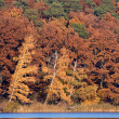 Red-Brown Fall Foliage at Lake — Stock Photo