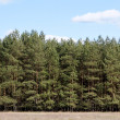 Tree Line at Meadow — Stock Photo