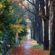 Fall Sidewalk in Berlin — Stock Photo #32161351