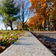 Low Perspective of Park in Fall — Stock Photo