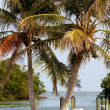 Twin Palm Trees at a Small Port — Stock Photo #35630073