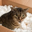Stock Photo: Annoyed cat in cardboard box of packing peanuts