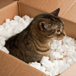 Curious cat in cardboard box of packing peanuts — Stok fotoğraf