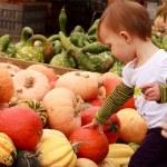 Child Touch Pumpkin — Stock Photo #8962394