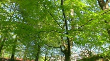 春景 3 — 图库视频影像