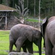 Elephant And Calf 2 — Stock Video