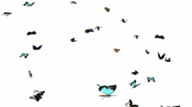 Looping Butterflies Slow Swarm Animation 2 — Stock video