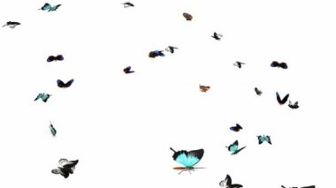 Looping Butterflies Slow Swarm Animation 2 — Stockvideo