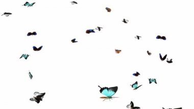 Looping Butterflies Fast Swarm Animation 2 — Stock video
