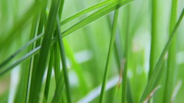 Grass closeup background — Vídeo Stock
