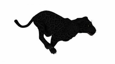 Photo-realistic Looping Panther Animation — Stock Video