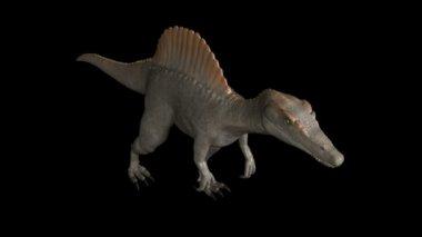 Spinosaurus caminar 01 — Vídeo de stock