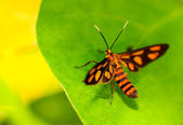 Orange butterfly — Stock Photo