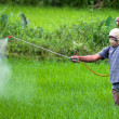 Stock Photo: Spraying pesticide