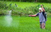 Spraying pesticide — Stock Photo