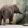 Zoo Elephant — Photo