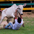 Stock Photo: Rodeo festival and cattle wrestling