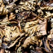 Background of fallen leaves decaying on the forest floor — Stock Photo