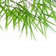 Backlit stems of beautiful green bamboo leaves with space for text — Stock Photo