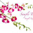 Stock Photo: Beautiful oriental magenta orchids against white background
