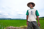JOGJAKARTA INDONESIA 15th MAY. Indonesia is currently the worlds fourth-largest producer of rice in the world. A farmer looks out to his paddy field, 15th May 2010 — Stock Photo