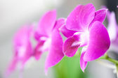 Beautiful miniature orchids on outdoor setting suitable for background use — Stock Photo