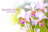 Outdoor tropical orchid with space for text — Stock Photo
