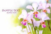 Utomhus tropisk orkidé med utrymme för text — Stockfoto