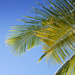 Royalty-Free Stock Photo: Palm leaves against blue skies as background