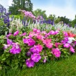 Stock Photo: Pretty manicured flower garden with colorful azaleas.