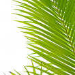 Palm fronds in an outdoor setting with vibrant green leaves - Stock Photo