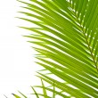 Palm fronds in an outdoor setting with vibrant green leaves — Stock Photo
