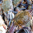 Heap of blue flower crab in a wet market - Stock Photo
