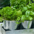 Pots of herbs by the kitchen window ledge — Stock Photo #19827875