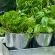 Pots of herbs by the kitchen window ledge - Stock Photo