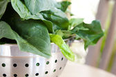 Fresh spinach in a steel colander — Stock Photo