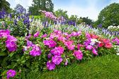 与多彩杜鹃花的修剪整齐漂亮花卉园. — 图库照片