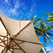 Parasol and palm trees against tropical blue skies — Stock Photo