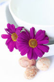 Chrysanthemums by a bowl of water ready for a spa treatment — Stock Photo