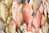 Closeup of fresh fish in wet market — Stock Photo