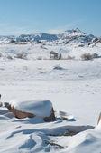 Desierto nevado vertical — Foto de Stock