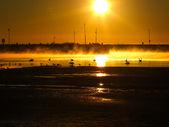 Golden Sunrise and wildlife — Stock Photo