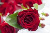 Rosas de rojo de la boda — Foto de Stock
