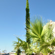 Green streetlight at a palm tree - Stock Photo
