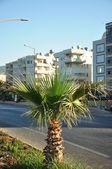 Kleine palmboom groeien op de weg — Stockfoto
